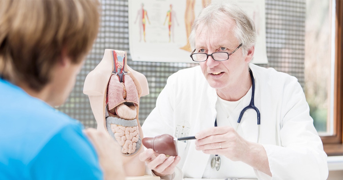 Doctor holding model liver and talking to patient