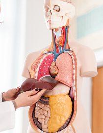 Is Liver Cancer Fatal