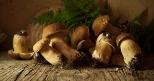 Mushrooms lined up on a wooden floor