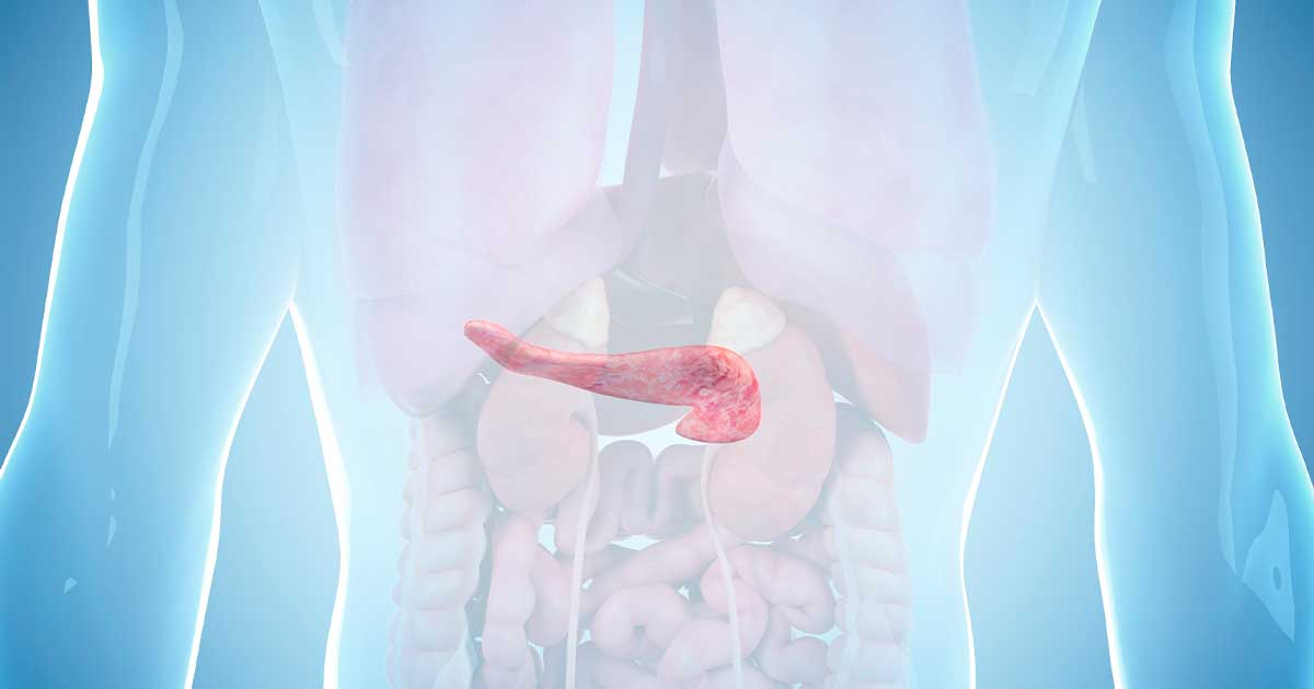 A picture of the human body showing where the pancreas is located.